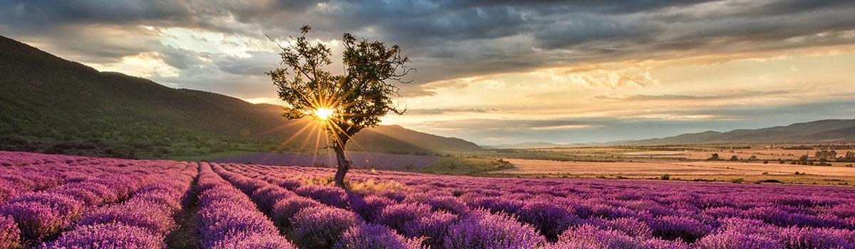 lavender-sunrise-PNFMBNM